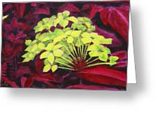 Ixora - Jungle Flame Greeting Card