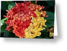 Ixora Flower Mix Greeting Card