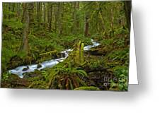 Lifeblood Of The Rainforest Greeting Card
