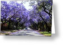 Jacarandas In Pretoria Greeting Card