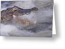 Jacare Caiman Fishing Greeting Card