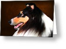 Black Jack- Collie Greeting Card
