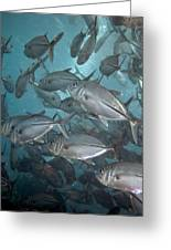 Jack Fishes At The U.s.a.t. Liberty Wreck Greeting Card