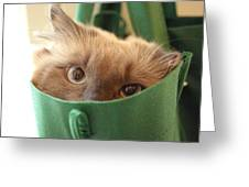 Jack In The Bag Greeting Card