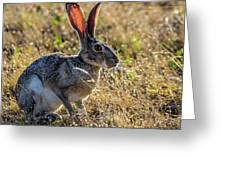 Jack Rabbit Greeting Card