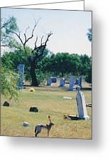 Jack Rabbit In Cementery Greeting Card