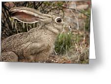 Jack Rabbit Portrait Greeting Card