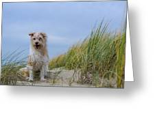 Jack Russel Lotje Greeting Card