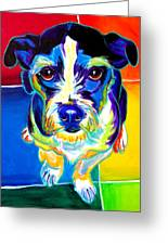 Jack Russell - Pistol Pete Greeting Card