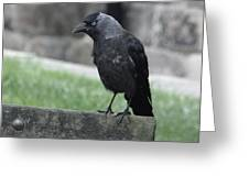Jackdaw - Stare Greeting Card
