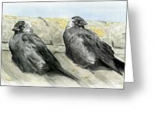 Jackdaws In The Sun Greeting Card