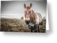 Jacketed Horse Greeting Card