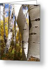 Jackson Hole Wyoming Greeting Card