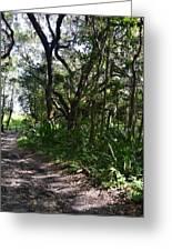 Jackson's Gap Trail Greeting Card