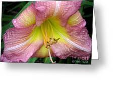 Jacqueline's Garden - Lily Glistening Thrice Greeting Card