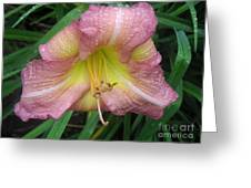 Jacqueline's Garden - Lily Glistening Too Greeting Card