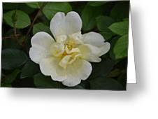 Jade And Ivory Greeting Card