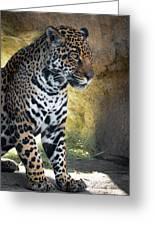 Jaguar At Rest Greeting Card