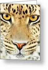Jaguar Greeting Card by Bill Fleming