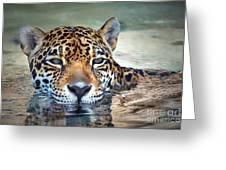 Jaguar Cooldown Greeting Card