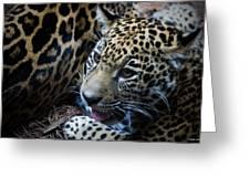 Jaguar Cub Greeting Card