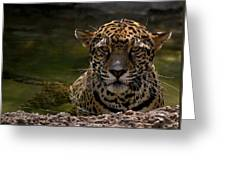 Jaguar In The Water Greeting Card
