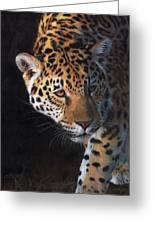 Jaguar Portrait Greeting Card