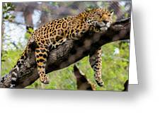Jaguar Relaxation Greeting Card