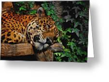 Jaguar Relaxing Greeting Card