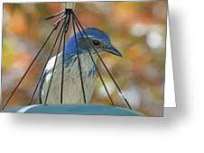 Jail Bird Greeting Card