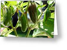 Jalapenos Greeting Card