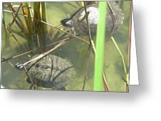 Jamaican Turtles Greeting Card