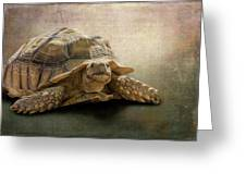 Jamal The Tortoise Greeting Card