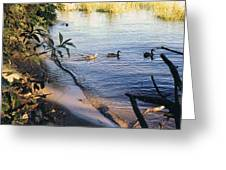 James River Ducks In A Row Greeting Card