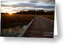 Jamestown Forest Loop Sunset Greeting Card