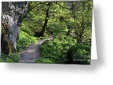 Janet's Foss Path Greeting Card