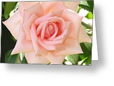 Janet's Pink Rose Greeting Card