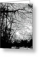 January Beauty 2 Black And White  Greeting Card
