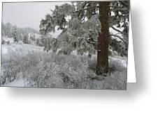 January On Kamiak Butte Greeting Card