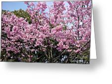 Japan Blossoms Greeting Card