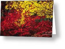 Japan Vibrant Leaves Greeting Card