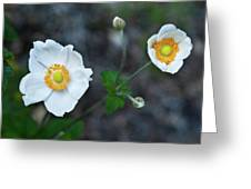 Japanaese Anemone Greeting Card