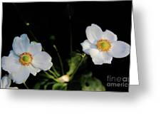 Japanese Anemone Flower Greeting Card