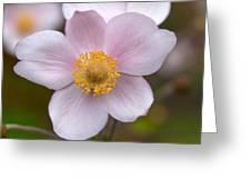 Japanese Anemone Greeting Card