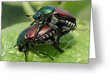 Japanese Beetles Mating Greeting Card