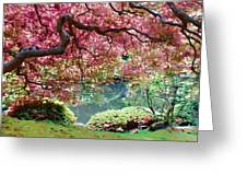 Japanese Burgundy Maple Tree Greeting Card
