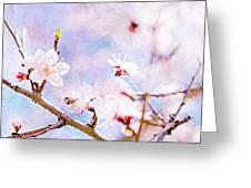 Japanese Cherry - Sakura In Bloom Greeting Card