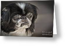 Japanese Chin Doggie Portrait Greeting Card