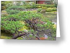 Japanese Elm Greeting Card