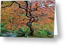 Japanese Garden Lace Leaf Maple Tree In Fall Greeting Card